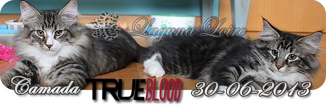 camada true blood
